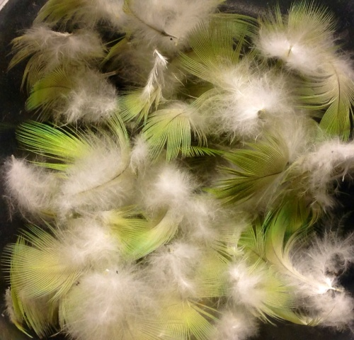 I picked these up under some trees where the ring necked parakeets spend most of their time...